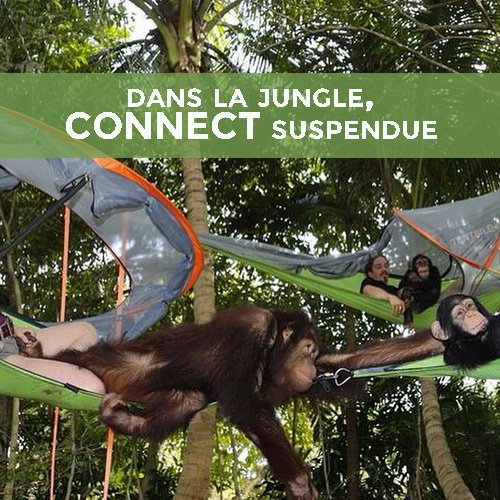 dormir dans la jungle - tente suspendue connect
