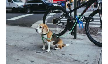 Le vélo avec un chien
